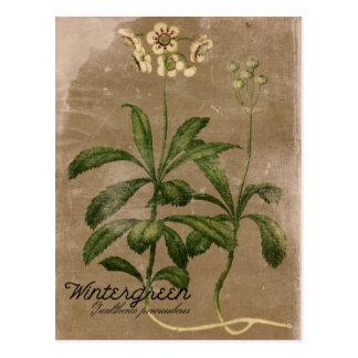 Vykort för vintagestilWintergreen växt