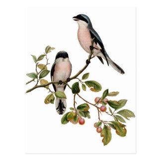 Vykort - två fåglar