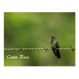 VykortHummingbird Costa Rica Vykort