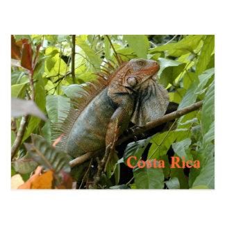 Vykortleguan Costa Rica Vykort
