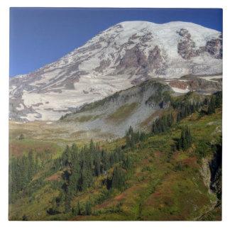 WA den Mount Rainier nationalparken, beskådar från Kakelplatta