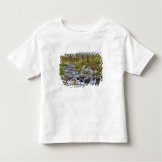 WA Mount Rainier nationalpark, Edith bäck T Shirts