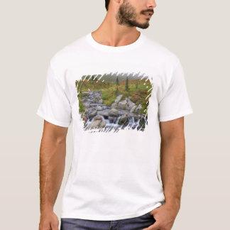 WA Mount Rainier nationalpark, Edith bäck Tröja