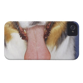 Wagging tunga för Collie iPhone 4 Cover