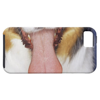 Wagging tunga för Collie iPhone 5 Cases
