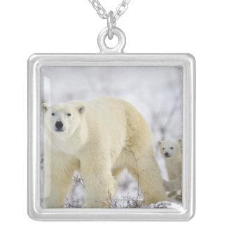 Wapusk nationalpark, Kanada Silverpläterat Halsband