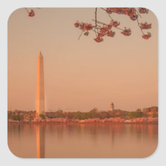 Washington monument Sakura på sunset.en Fyrkantigt Klistermärke
