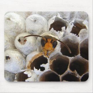 Waspen som dyker upp från, bygga bo musmattan musmatta