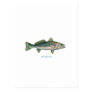 Weakfish Vykort