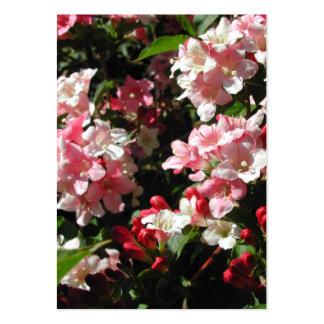 Weigela. Nätt rosa Flowers. Set Av Breda Visitkort