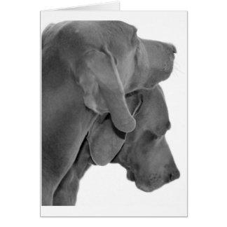 Weim porträtt - svart & vit kort