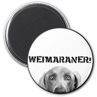 Weimaraner nation: Weimaraner i en boxas! Magnet