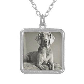 Weimaraner porträtt silverpläterat halsband