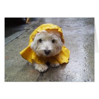 Westie i gult regnar Mac! Hälsningskort