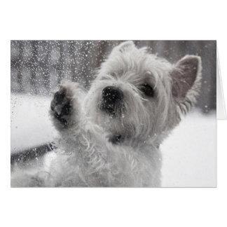 Westie i regna hälsningskort