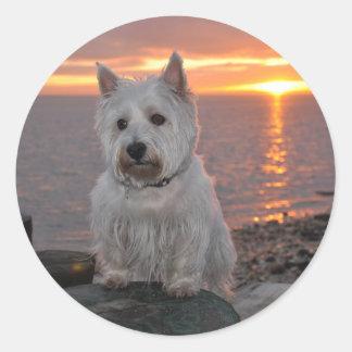Westie solnedgång runt klistermärke