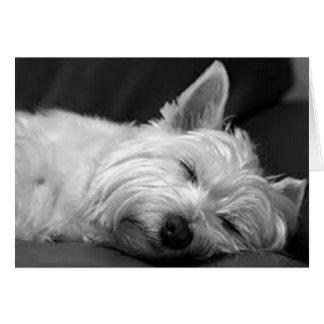 Westie sovande hälsningskort