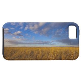 Wheatgrass och dramatiska himmlar på Freezeout Tough iPhone 5 Fodral