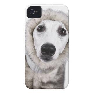 Whippet hund som ha på sig pälslaget, skjuten iPhone 4 cases