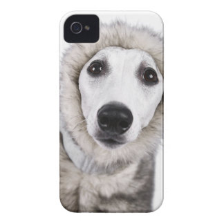 Whippet hund som ha på sig pälslaget, skjuten iPhone 4 skydd