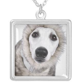 Whippet hund som ha på sig pälslaget, skjuten silverpläterat halsband