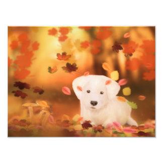 White Dog paper photo professionnel Kodak Fototryck