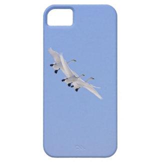 Whoopersvanar som flyger i himmlen iPhone 5 fodral