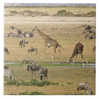 Wildebeests, zebrodern och giraff samlar på a kakelplatta