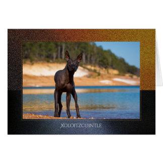 Xoloitzcuintle hälsningkort hälsningskort