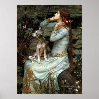Xoloitzcuintli (K) - placerade Ophelia Poster