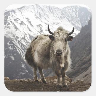 Yak i Nepal Fyrkantigt Klistermärke