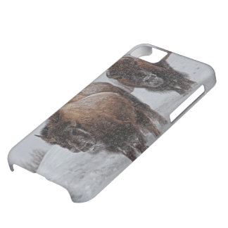 Yellowstone Bison iPhone 5C Fodral