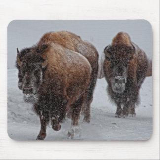 Yellowstone Bison Musmatta