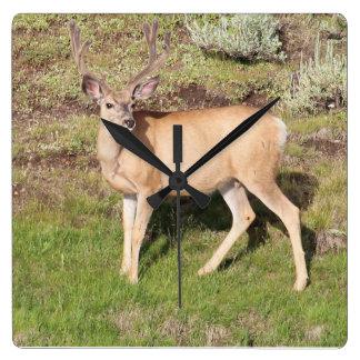 Yellowstone hjort i sammet fyrkantig klocka