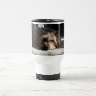 Yorkhire/silkeslen Terriermuggar, exponeringsglas Resemugg