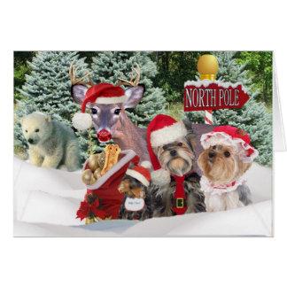 Yorkie Santa tassar på nordpolenkorten Hälsningskort