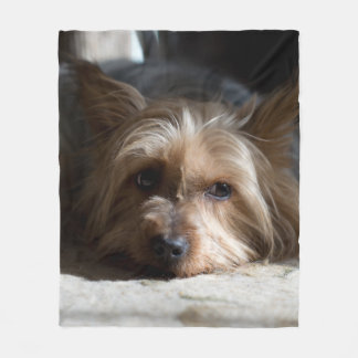 yorkshire/silkeslen terrierullfilt fleecefilt