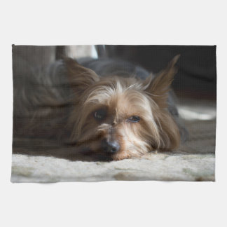 yorkshire/silkeslena Terrierhanddukar Kökshandduk