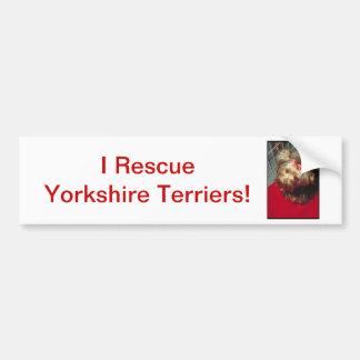 Yorkshire Terrier Bildekal