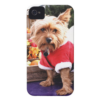 Yorkshire Terrier iPhone 4 Cases