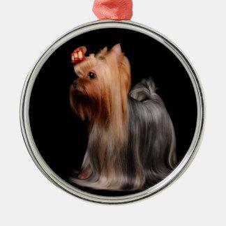 Yorkshire Terrier på svart Julgransprydnad Metall