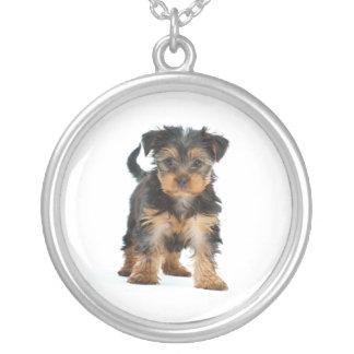 yorkshire terrier silverpläterat halsband