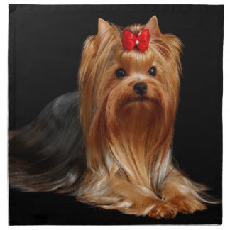 Yorkshire Terrier Tygservett