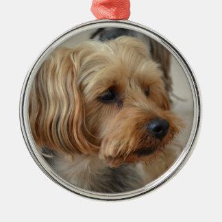 Yorkshire Terrier Zac Julgransprydnad Metall