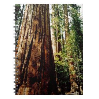 Yosemite redwoodträd anteckningsbok