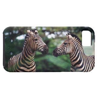 zebror iPhone 5 fodral