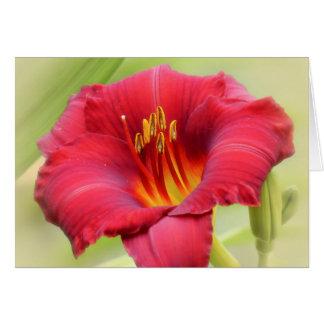 Zinger - Daylily Hälsningskort