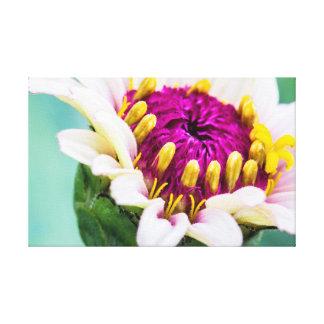 Zinnia i blomkanfas canvastryck