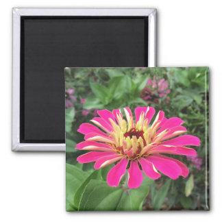 ZINNIA - vibrerande rosor och kräm - Magnet