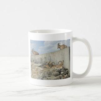 zoo kaffemugg